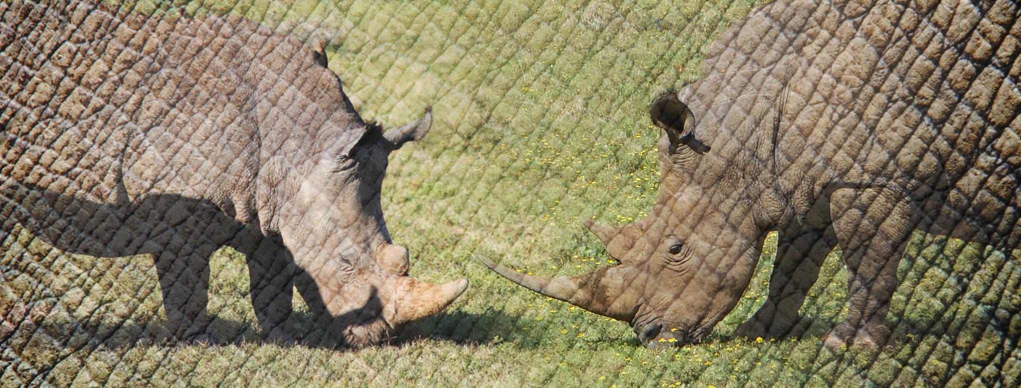 wildlife banner 4