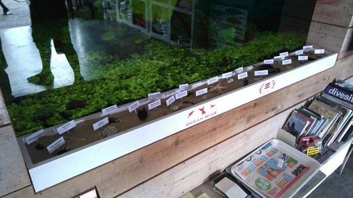 Educational Display Case